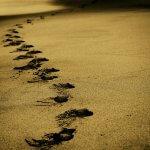Những bước chân nhỏ
